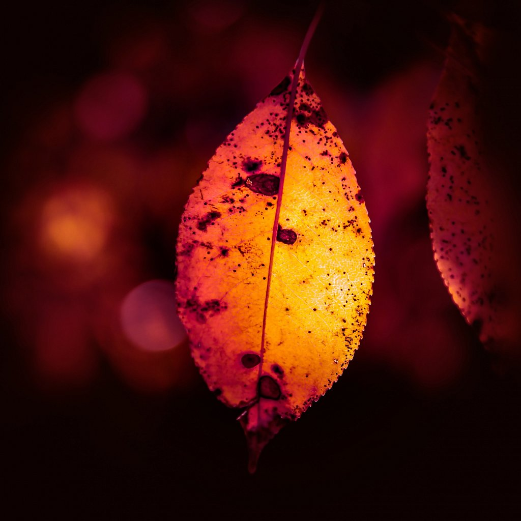 Autumn Magic II